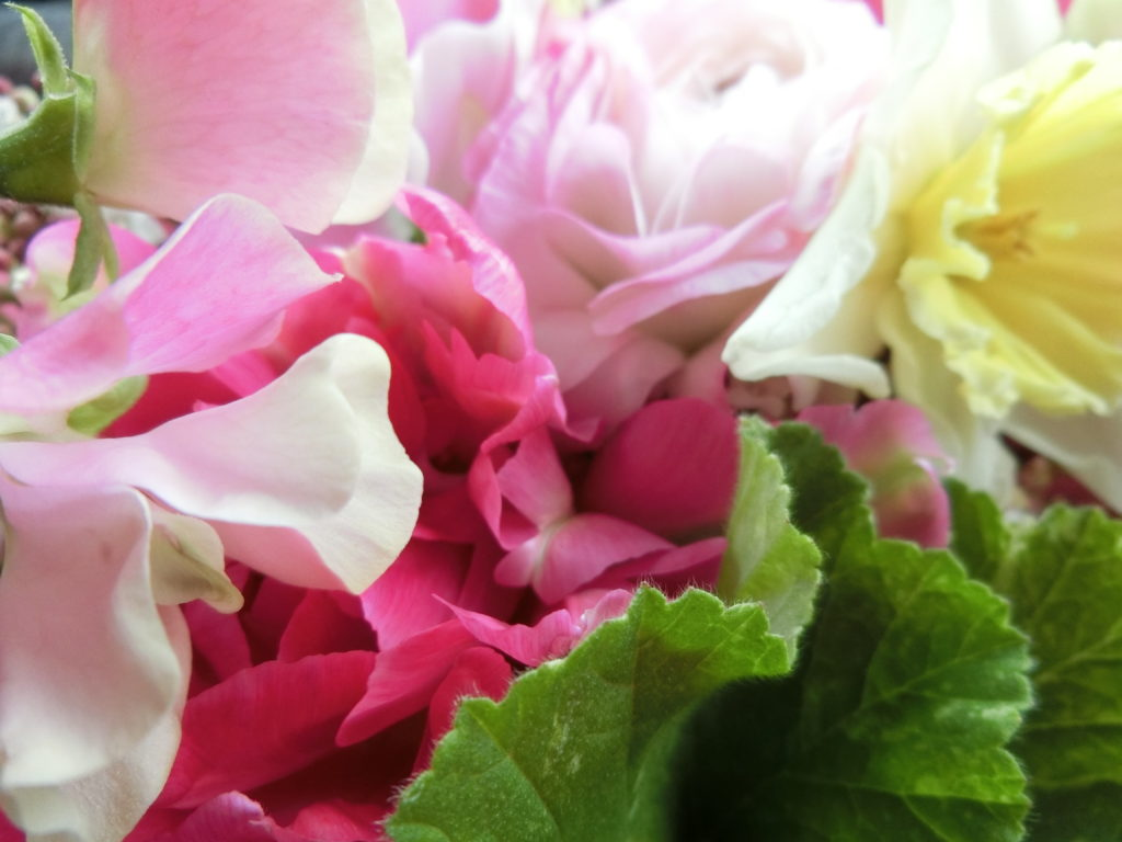 淡い春の花 ペアレントトレーニング