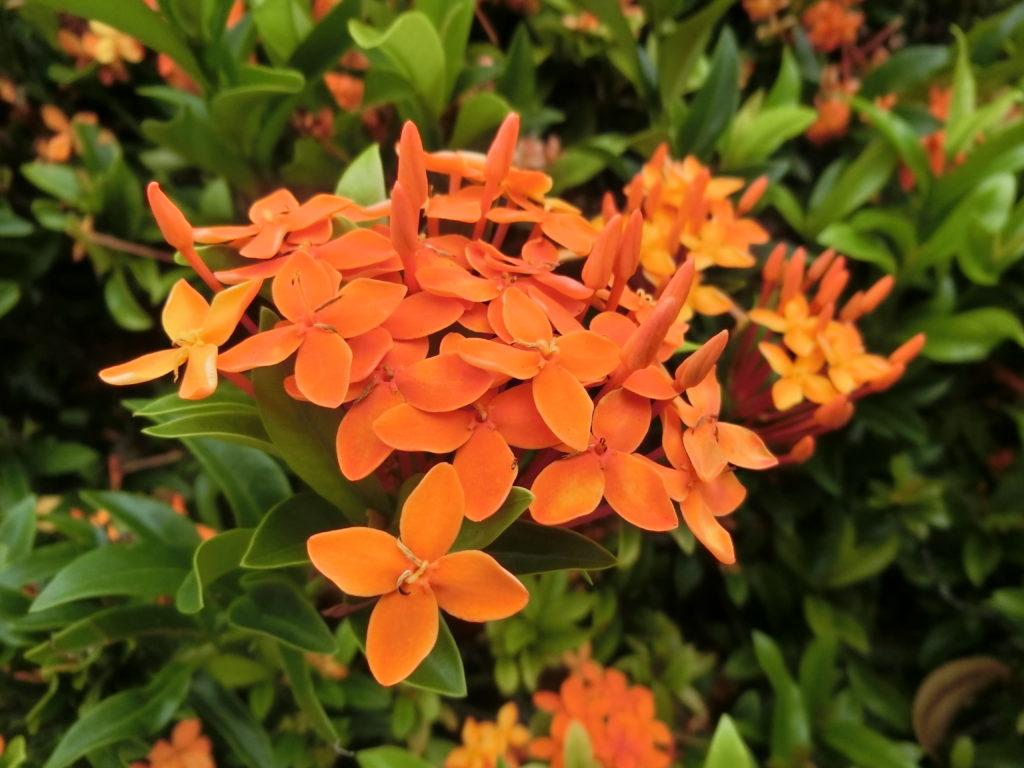 オレンジの花 ペアレントトレーニング